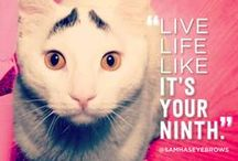 Life Advice From Animals / Take it from an animal - life isn't complicated.