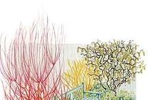 Gardening / by Linda Beale