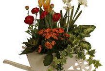 AIRES / Arranjos lindos e delicados com flores, vidros, latas.