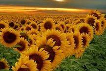 Flores. / A beleza e exuberância de todas as flores.