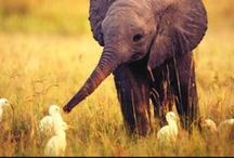 AMIZADE / Amizade entre animais de diferente especie, lindo demais!!