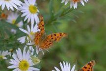 BORBOLETAS / Amo borboletas. E quero poder admirar sem prender.