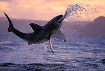 MAR, RIO... / A vida nas águas, todas as especies.