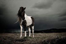 my fav horses