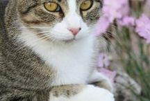 Cats - Kissat