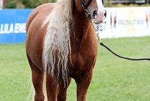 Horses - Hevoset