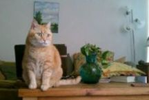"""*Jack ginger cat / Memory of my ginger tabby cat """": Jack / by Vanessa Padin"""
