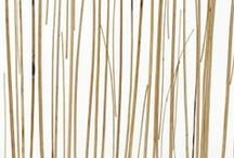TRENDING: Bamboo