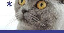 Moi le chat / Lapbook sur le chat de l'Association Carpe Diem