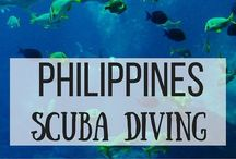 Diving in the Philippines / Philippines is one of the best scuba diving spots in the world, especially for macro diving.