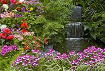 Garden Water Features / A board for the best of water features.