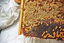 Bees, Hives, and Honey / The buzz on Bees!
