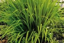 Your Dream Garden / Tips for yard and garden maintenance and garden and landscape design ideas!