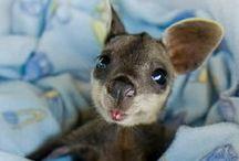 too cute / too cute animals