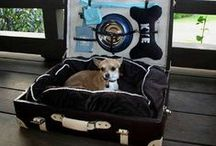 Travelling with Pooch / Our pooches are family and why shouldn't they go travelling with us. Here are some pins that we hope will make travelling with fido something you can all enjoy.