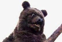 Bear Bear Bear!!! / bears , bear costumes, grizzly bears, realistic bear costumes