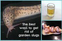tipy a triky zahrada / domácí rady proti škůdcům,přírodní hnojiva.....
