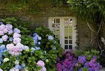 venkovské zahrady, zákoutí, květinové truhlíky,koryta, košíky, mísy... / úprava a design zahrad, květinová zákoutí, osázené truhlíky, mísy, košíky,koryta...