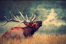 Animals / All of God's Creatures. :D / by D M