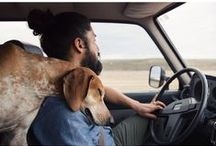 Dog Along / Our best friends are along for the ride. Roll down the windows and let it all hang out!