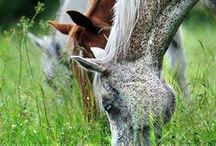 Horses / My life and love