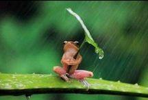 regen / rain