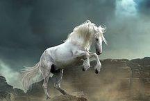 Cavalli e Asini