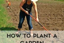 Gardening / Have a green thumb or just want one? This board is for you!