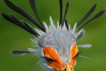 birds / by Karen Hanlon