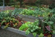 Vegetables / Vegetable varieties available at Eckert's and knowledge on taking care of your veggie gardens!
