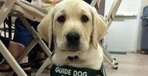 Dog Training Tips / Dog Training | Learn all about training and care for your Labrador Dog at http://www.LabradorTrainingHQ.com
