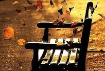 Autumn ☔ ☂ ☁