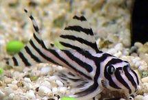 Fish Tank / Fish, plants, and fish tank hygiene