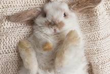 American Pet Loves Rabbits, Buns and Bunnies