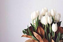◄ FLOWERS