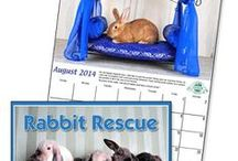 American Pet supports pet rescues / by American Pet Diner