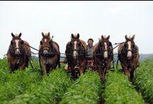 Horse working / Mit Pferden arbeiten / by Gabriel Troxler
