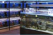 Aquarium ideas for the home.
