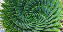 plantas decorativas, suculentas e aromáticas