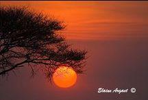 Stunning Sunrises / Stunning Sunrises captures the promise of the day to come as the sun rises above the horizon. #EvenEasierDigitalPhotography #sunrise #photography
