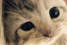 kediler:)