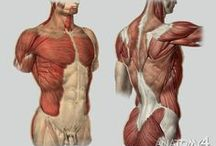 anatomy / anatomy of the human body for drawing referances