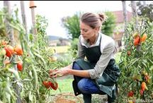 Gardening / Our favorite gardening tips and tricks, planting ideas and more goodies for greener yards and outdoor landscapes.