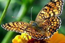mariposas / Naturaleza. www.manualidadespinacam.com