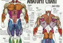 Body & Health ~