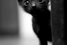 Pets and Animals / my cats and other cuteness overloads