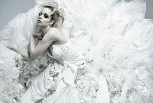 :white swan / purest color