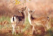 Maison Belle ❤ deer - hert / deer in house, hert in huis