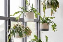 Maison Belle ❤ plants / Plant inspiration inside home