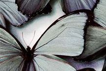 Maison Belle  ❤ butterfly - vlinder / Interior inspiration butterfly